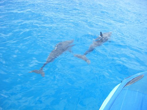 Dolphins1